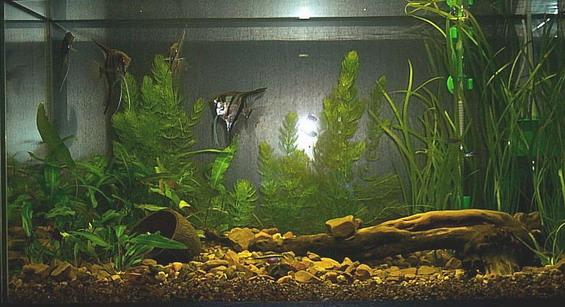 Пример оформления аквариума